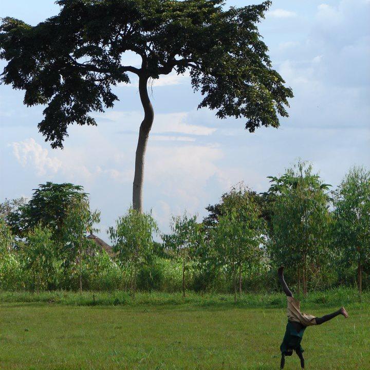 uganda-tree